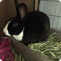 Adopt A Pet :: Petunia - Brownsburg, IN