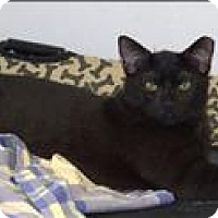 Adopt A Pet :: Nimbus - Portsmouth, VA