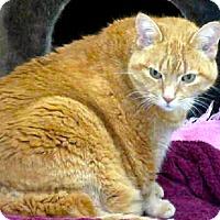 Adopt A Pet :: Bessie - Toronto, ON