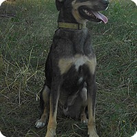 Adopt A Pet :: BoBo - Huntsville, AL