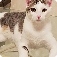 Adopt A Pet :: Luke - Jacksonville, FL