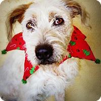 Adopt A Pet :: Madeline - Casa Grande, AZ