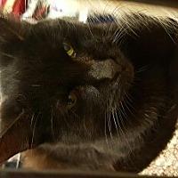 Adopt A Pet :: Ren - Lyons, IL