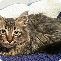 Adopt A Pet :: Jackie - Corona, CA