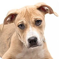 Adopt A Pet :: Paisley - Westfield, NY
