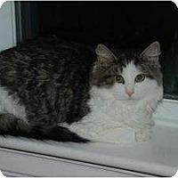 Adopt A Pet :: Yolanda - Auburn, CA