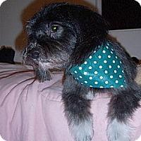 Adopt A Pet :: Darren - Templeton, CA