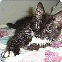 Adopt A Pet :: Das - Davis, CA