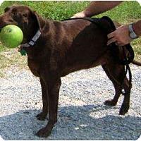 Adopt A Pet :: Chaka - Altmonte Springs, FL