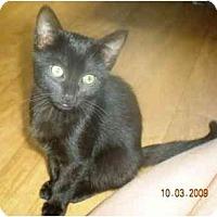 Adopt A Pet :: Twilight - Summerville, SC