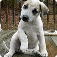 Adopt A Pet :: Terry R - Brattleboro, VT