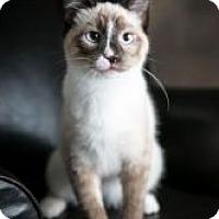 Adopt A Pet :: Spirit - Eagan, MN