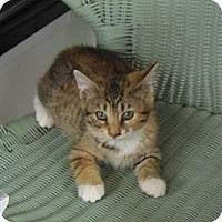 Adopt A Pet :: Tootsie - Catasauqua, PA