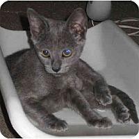 Adopt A Pet :: Hazel - Davis, CA