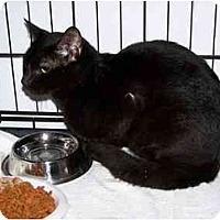 Adopt A Pet :: Bagheera - Syracuse, NY