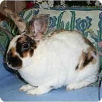 Adopt A Pet :: Briscoe - Newport, DE