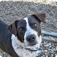 Adopt A Pet :: Moses - Huntingburg, IN