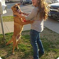 Adopt A Pet :: Bear - West Hartford, CT