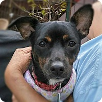 Adopt A Pet :: Sable - Acushnet, MA