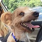 Adopt A Pet :: Wafer
