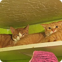 Adopt A Pet :: Cheddar - Coos Bay, OR