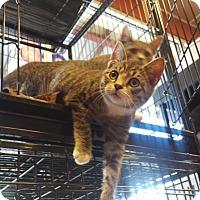 Adopt A Pet :: Clyde - Exton, PA