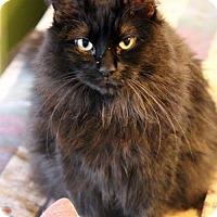 Adopt A Pet :: Kimi - Dallas, TX