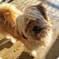 Adopt A Pet :: Chewy - Pompton Lakes, NJ