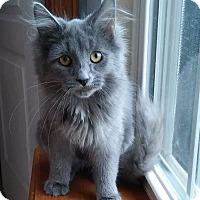 Adopt A Pet :: Maggie Grey - Covington, KY