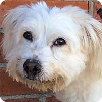 Adopt A Pet :: BUNDY (video) - Los Angeles, CA