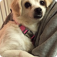 Adopt A Pet :: Tilly - Tracy, CA