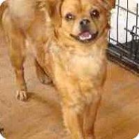 Adopt A Pet :: Rosie - Leesport, PA