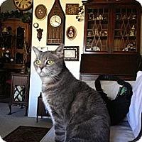 Adopt A Pet :: Poobah - Laguna Woods, CA