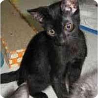 Adopt A Pet :: Noodle - Davis, CA