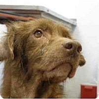 Adopt A Pet :: Krome - Miami, FL