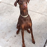 Adopt A Pet :: Fred--courtesy post - New Richmond, OH