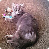 Adopt A Pet :: Charlotte - Burlington, ON