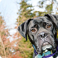 Adopt A Pet :: Tippy - Bellingham, WA