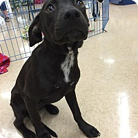 Adopt A Pet :: MIA - Beaumont, TX