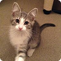 Adopt A Pet :: Simone - Covington, KY