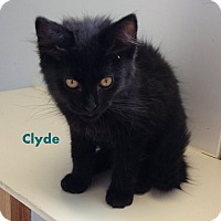 Adopt A Pet :: Clyde - Mountain View, AR