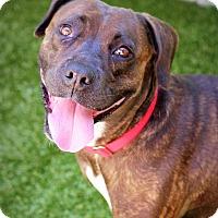 Adopt A Pet :: Sheila - Ft. Lauderdale, FL