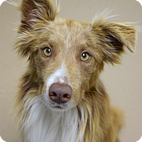 Adopt A Pet :: Redford - Dublin, CA
