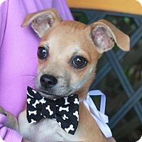 Adopt A Pet :: Peanut - Garfield Heights, OH