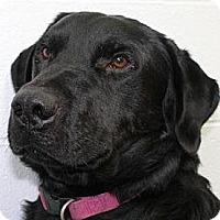 Adopt A Pet :: Woodstock aka Val - Buckeystown, MD