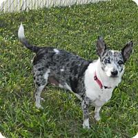 Adopt A Pet :: Sammy - Umatilla, FL
