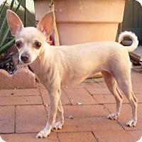 Adopt A Pet :: Maisy Mae - San Diego, CA