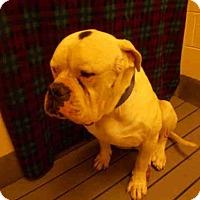 Adopt A Pet :: *BRUNO - Upper Marlboro, MD