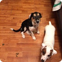 Adopt A Pet :: Tori - St. Catharines, ON
