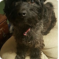 Adopt A Pet :: Fidget - Walker, LA